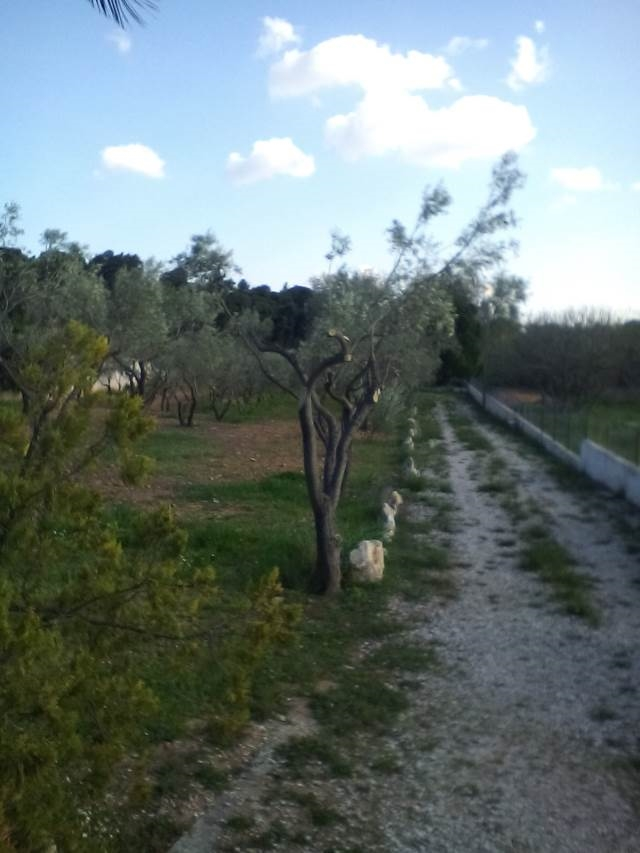 (For Sale) Land Plot || East Attica/Pallini - 3.113 Sq.m, 500.000€